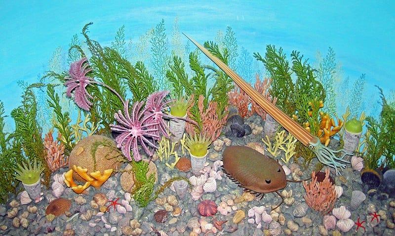 Este é o diorama de um antigo leito marinho na área de Cincinnati, Ohio, durante o Ordoviciano Superior. Esta é uma exposição pública no Museu Estadual de História Natural de Nebraska. Os organismos descritos incluem um cefalópode nautilóide de casca reta, trilobitas Isotelus & Flexicalymene, corais chifres Grewingkia, corais coloniais, bivalves, gastrópodes, braquiópodes, briozoários, crinóides, edrioasteroides, estrelas do mar e algas.