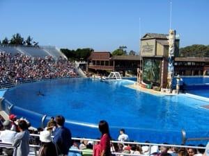 Orca Tank