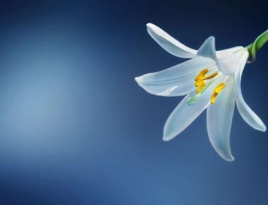 Unica floare din țară care înfloreşte doar la ger de minus 20C!