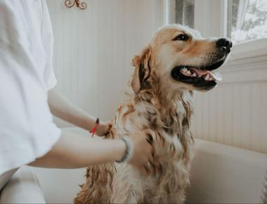 Dog Grooming: How Long Does It Take?