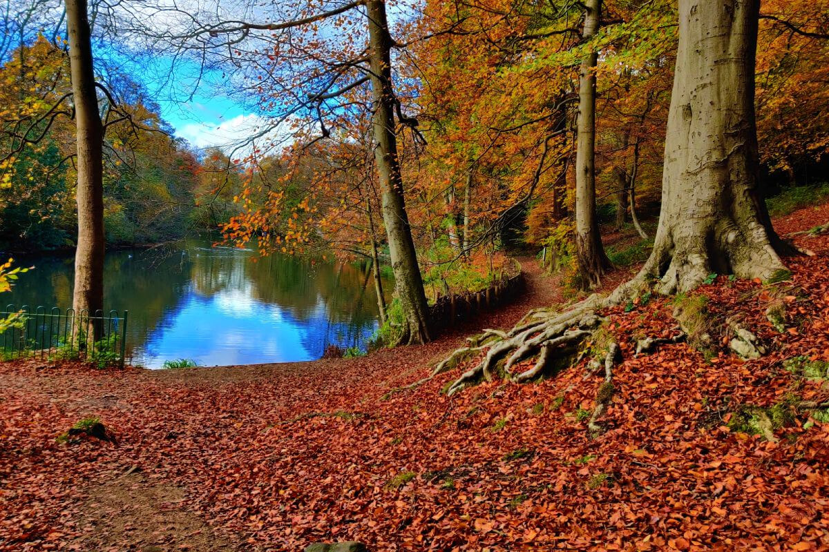 Gledhow Woods lake in Autumn