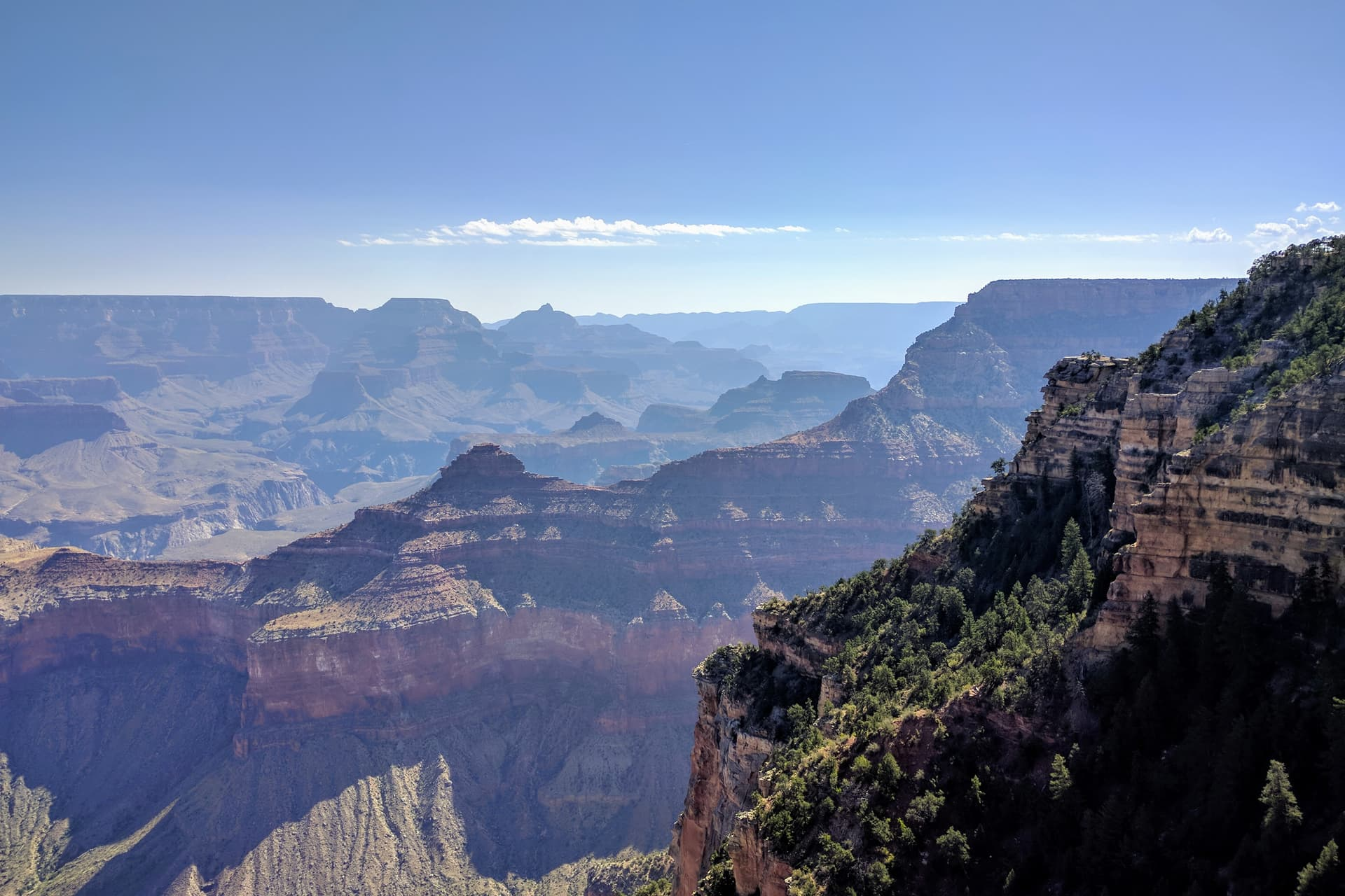 A view across the Grand Canyon. Morning fog partially obscurs the far side. In the foreground, part of the South Rim falls away into the Canyon in a series of steep terraces. Pine trees cover its terraces and slopes.