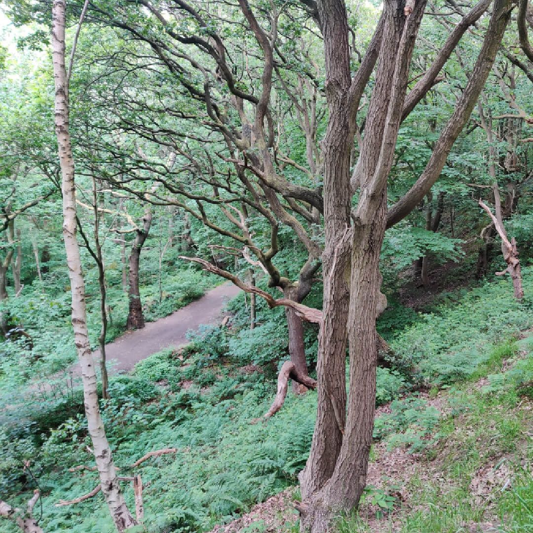 Hawksworth Wood from high up