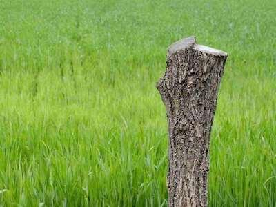 Fertighaushersteller bayern holz qualitaet
