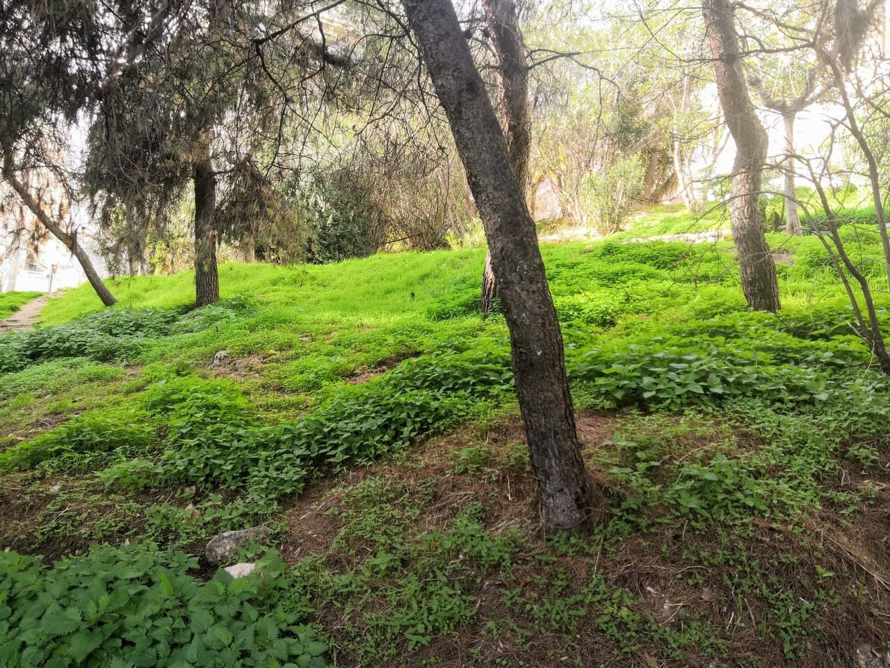 Inside a forest on a hillside