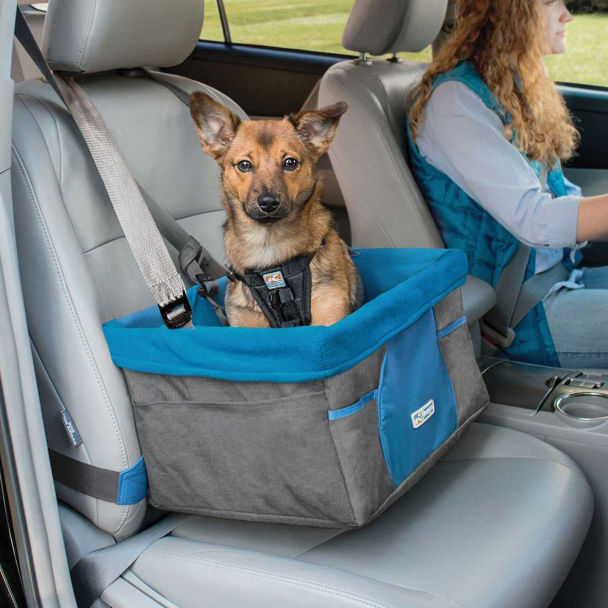 5 Tips for Safe Travel with your Pets