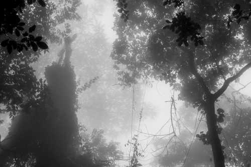 Foret Naturelle Cyamudongo
