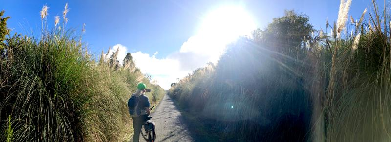 Cycling through a patch of toetoe