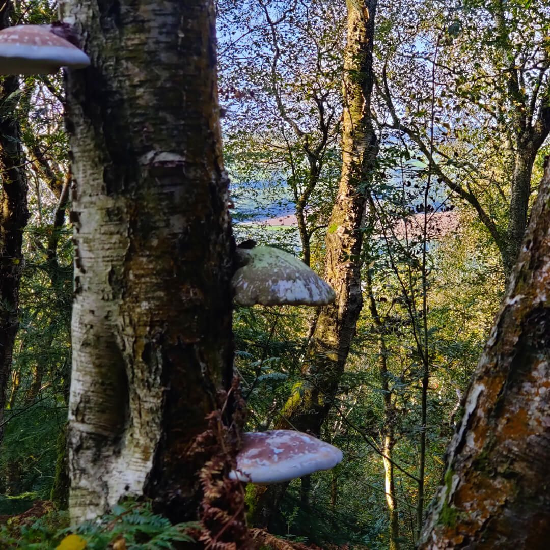 Otley Chevin Forest Park dense woodland and mushrooms