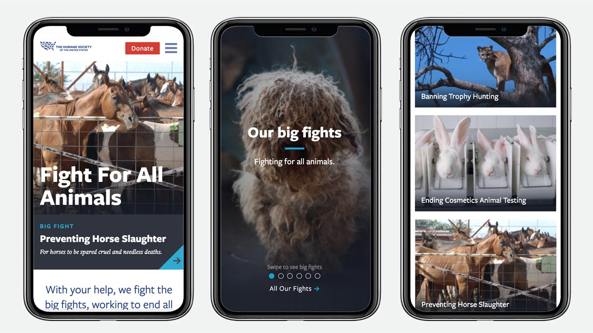 Three smartphones showing images of the HSUS website