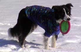 Mr Peabody in his Fleece Coat
