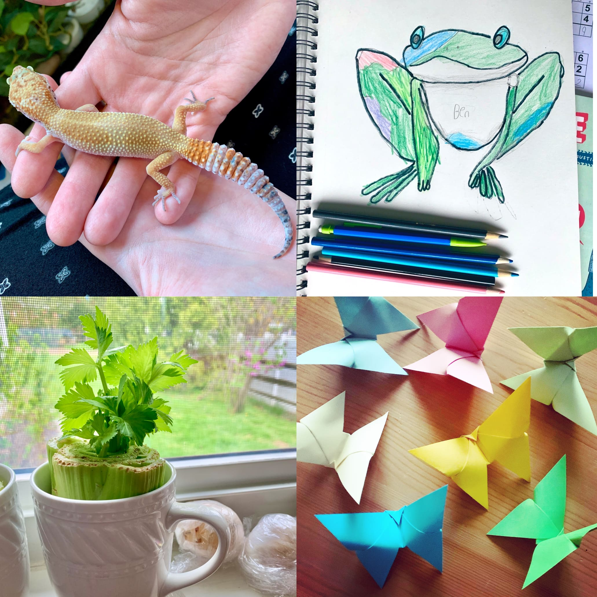 A lizard, origami, drawing, and celery plant