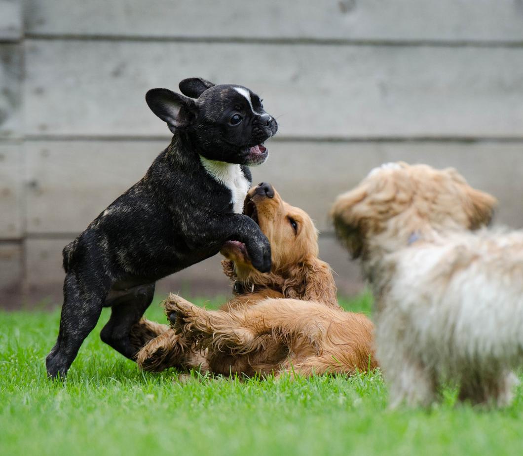 puppycentre.com