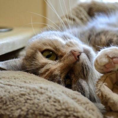cat-kennel-winnipeg