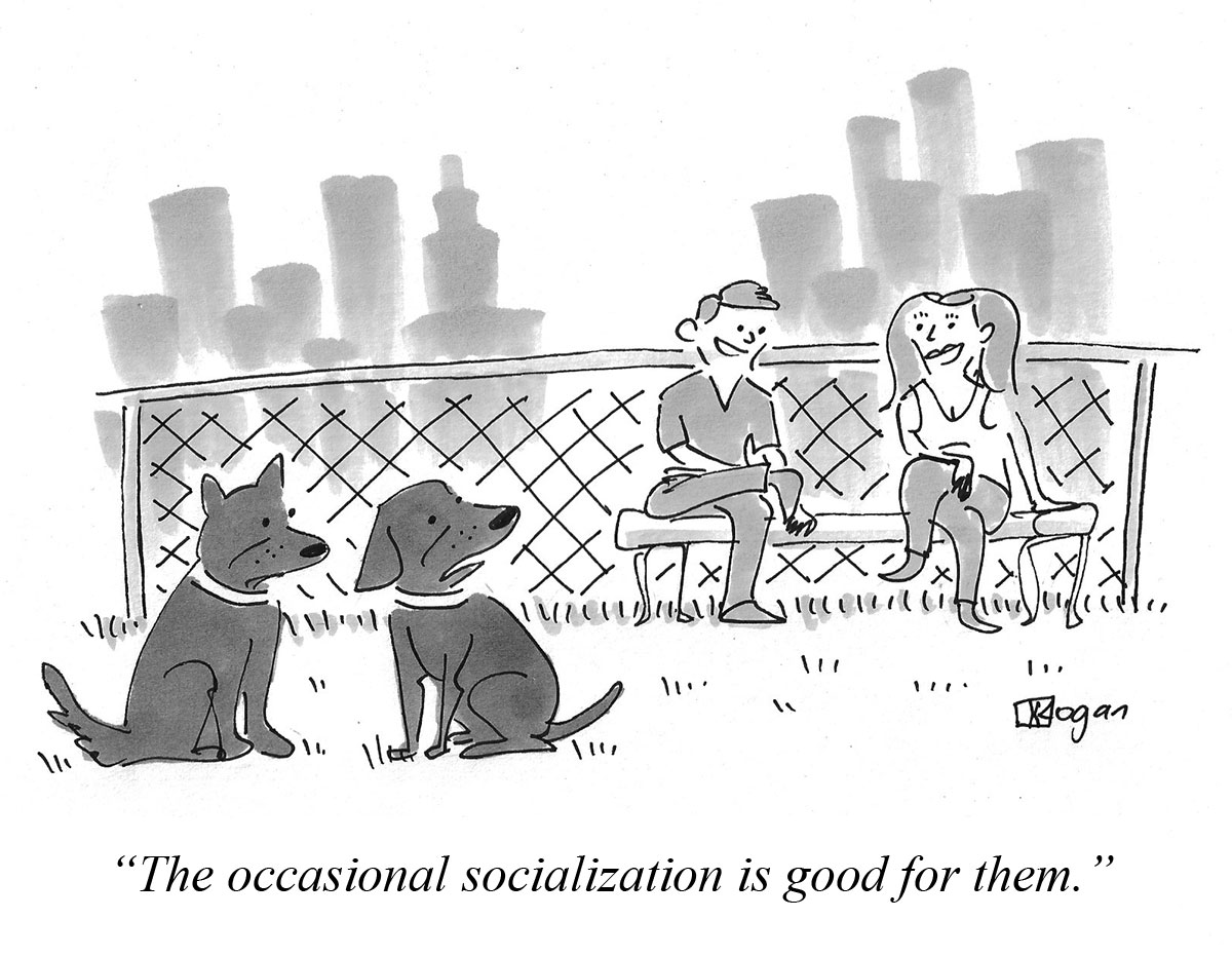 The occasional socialization is good for them.