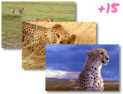 Cheetah theme pack