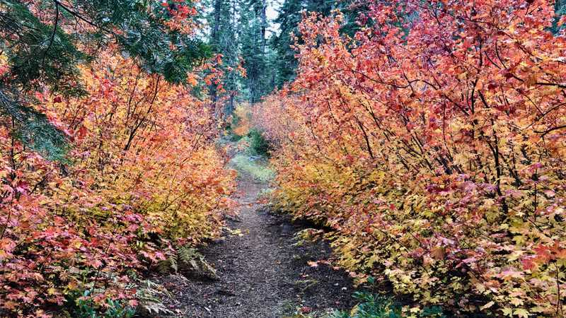 Shrubs in fall colors