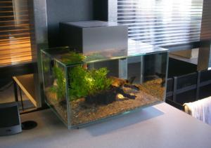 Choosing Freshwater Aquarium Fish for Your Home