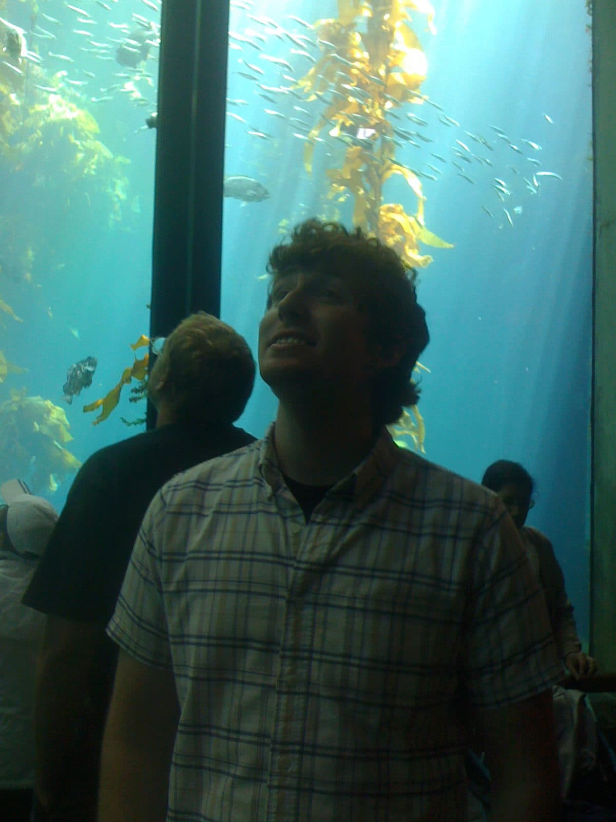 kelp forest and me