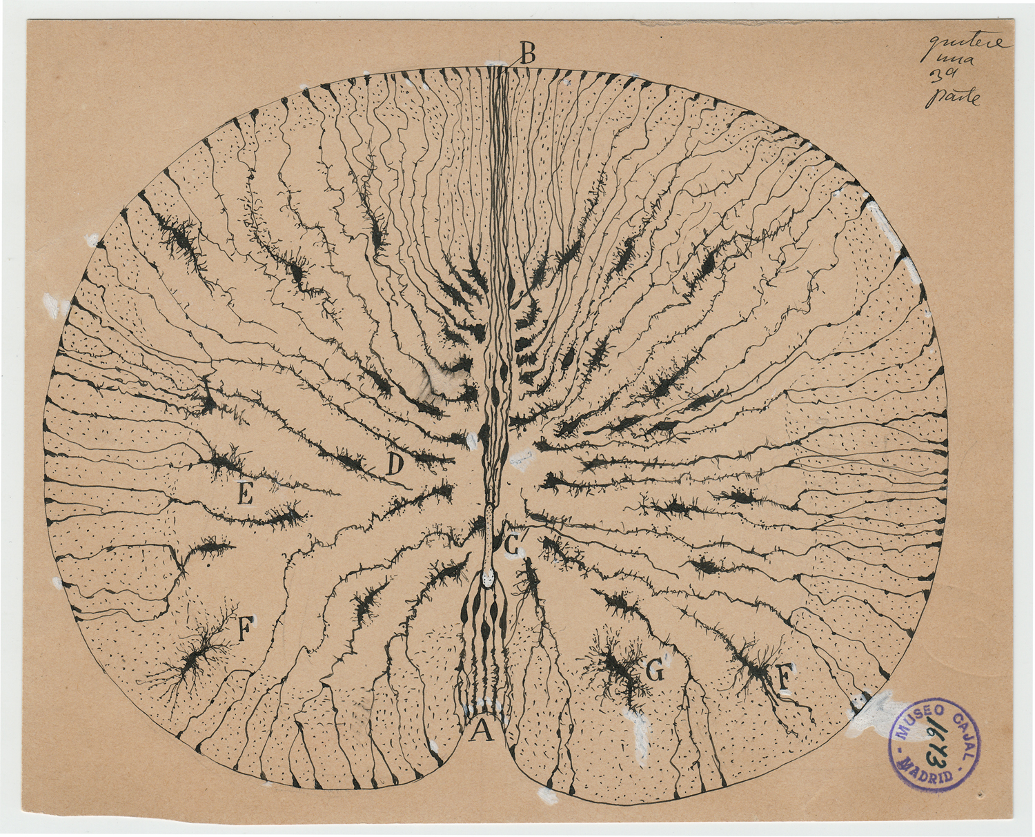 Cajal and the Enchanted Loom, by Rodolfo Llinás (THIS EVENT HAS BEEN POSTPONED - STAY TUNED FOR NEW DATE!)