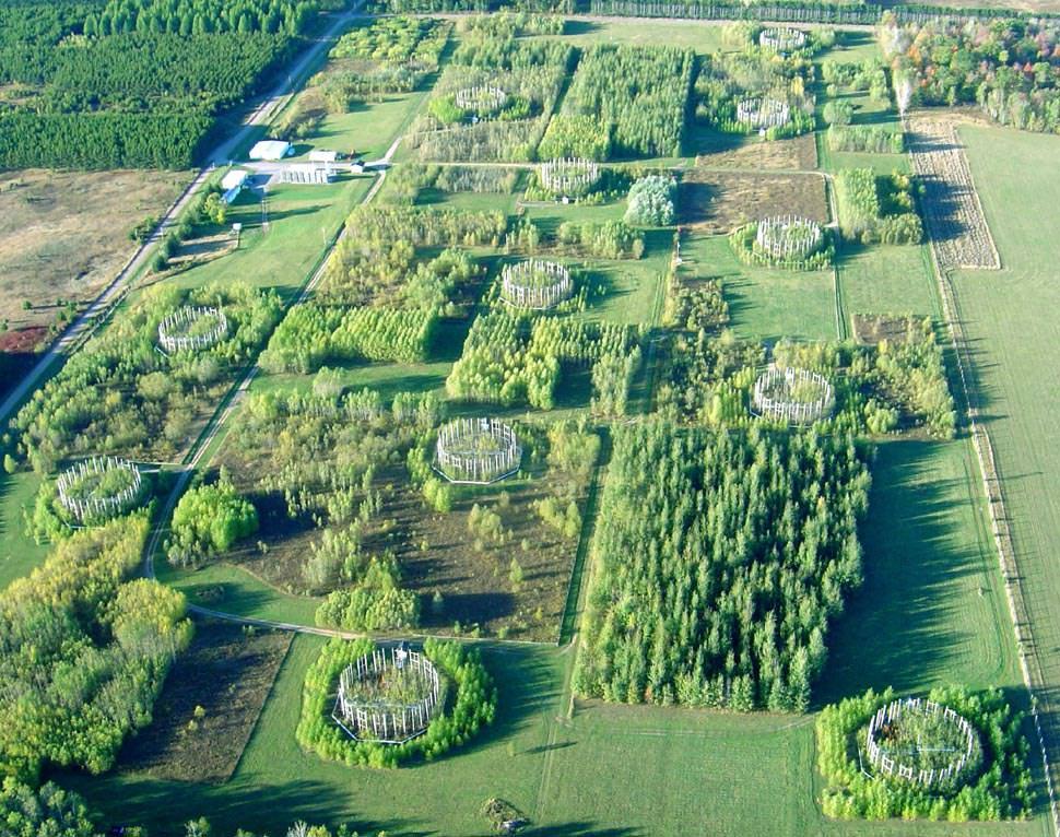 1. kép: FACE kísérleti parcellák a szén-dioxid növényzetre gyakorolt hatásainak kutatására