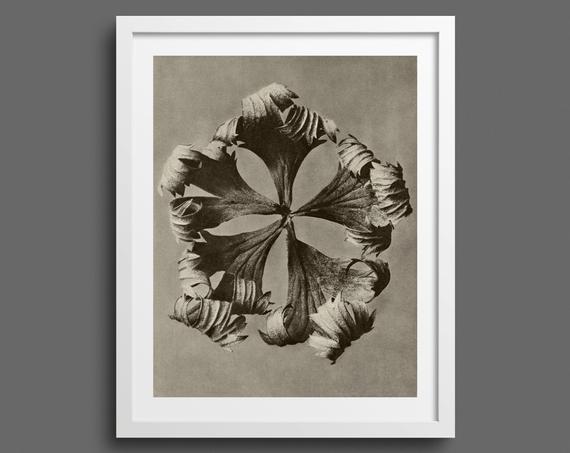 Delphinium Larkspur - Plate 42