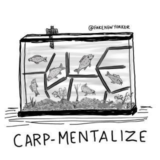 Carp-mentalize.jpg