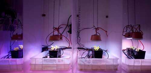Fasi di sperimentazione delle lampade Bulbo (courtesy Bulbo)