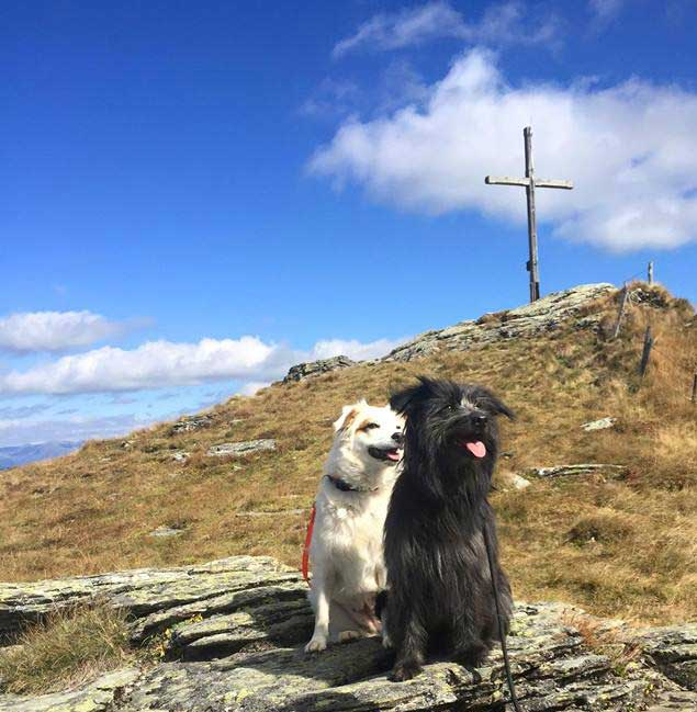 Ayo und Anny - Tierphysiotherapie Meyer