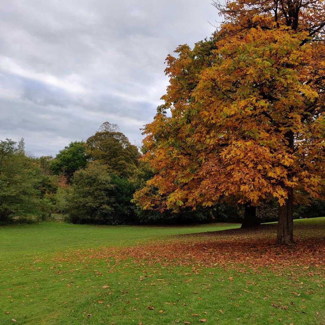 Meanwood Park tree in Autumn