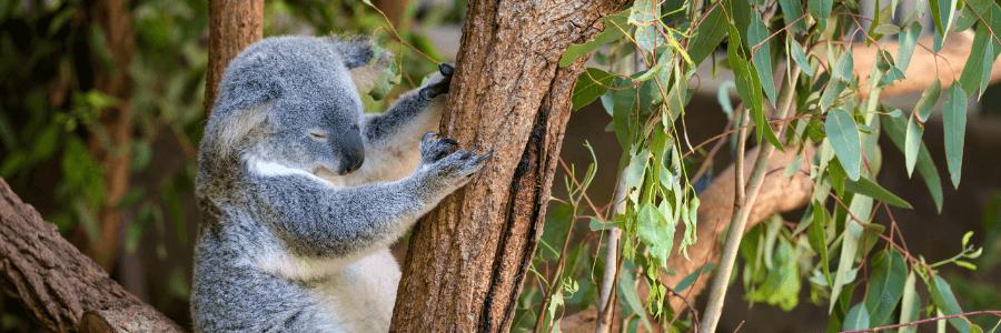 Sheets And Giggles Review - Koala