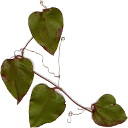 an image of a greenbriar vine