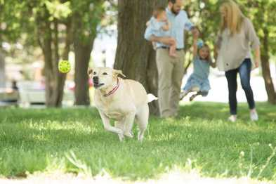 6 Tips for Handling High-Energy Dogs