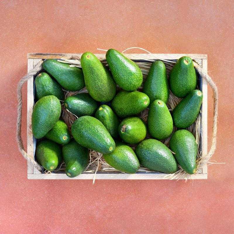 Obstkiste mit frischen Avocados von Kreta 3kg