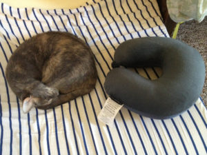 Cat and a neck pillow side by side