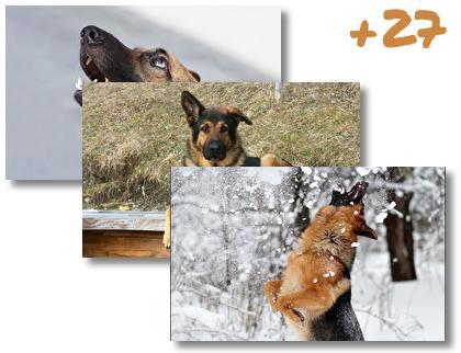 German Shepherd theme pack