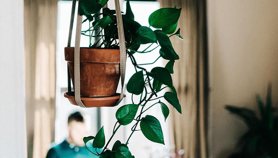 5 trendiga växter du inte kan döda