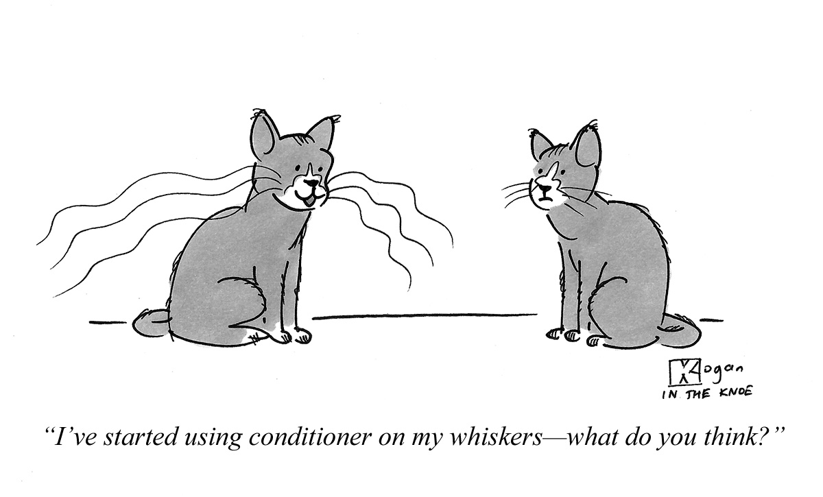I've started using conditioner on my whiskers--what do you think?