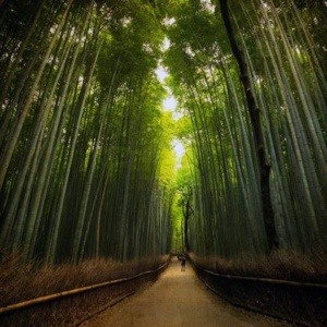 agano Bamboo Forest