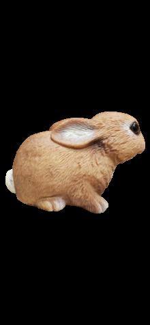 Bunny photo
