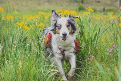 Dog-Friendly Hikes: Arizona