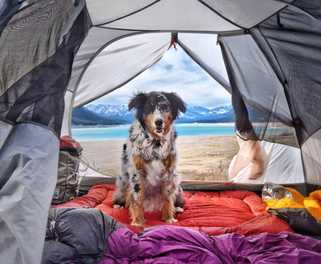 6 Tips for Camping with your Dog
