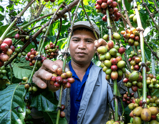 A man showing his coffee tree