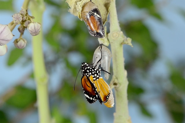 Metamorphosis of a butterfly, photo by Bankim Desai on Unsplash
