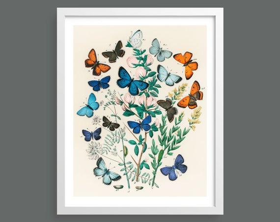Vintage European Butterflies & Moths