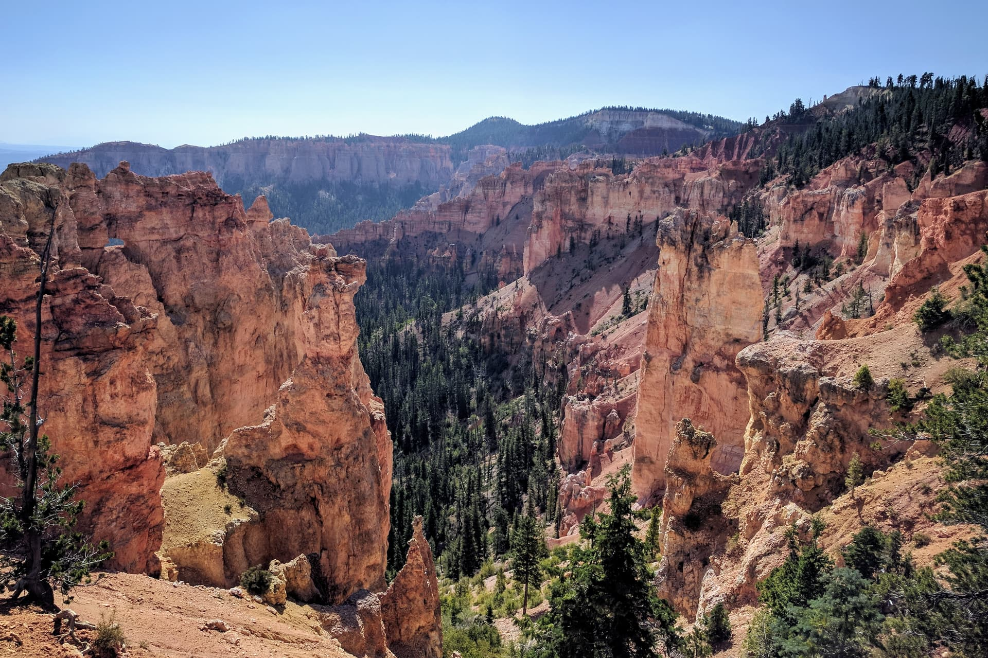Looking down a steep gulch in the wall of Bryce Canyon to the pine forest below. Red and white pillars of soft rock cluster together, eventually becoming the rim of the Canyon. The pillars stop abruptly, and are immediately replaced by a pine forest.