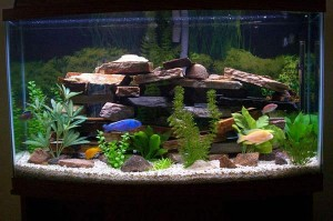 Types Of Freshwater Aquarium Fish For Your Fish Tank
