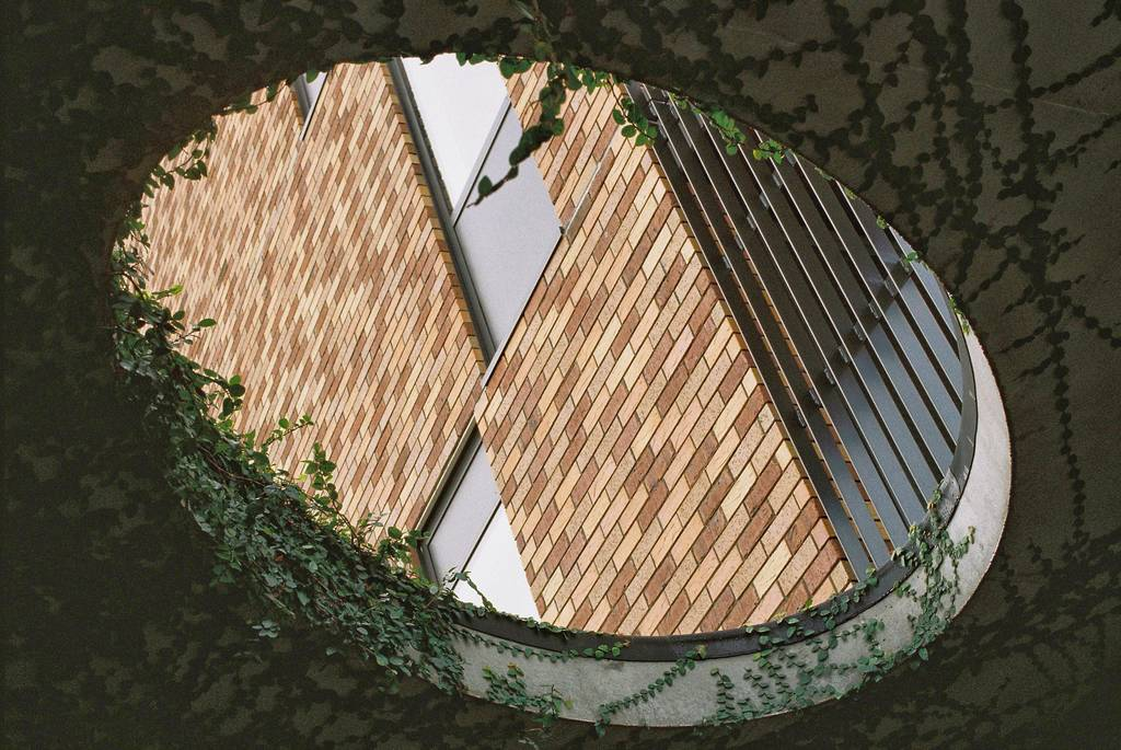 A hole in a roof covered in vines looks through to a brick building
