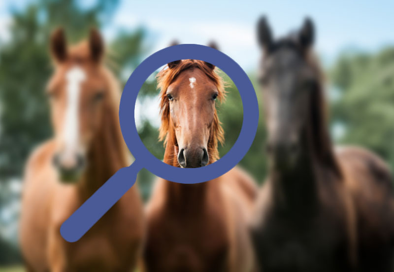 Finding a horse using Facebook groups