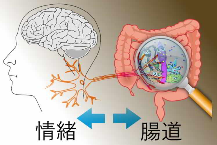封面圖片(腸內細菌及腸神經系統影響情緒及腦健康 ─ 補充益生菌利保身心健康)